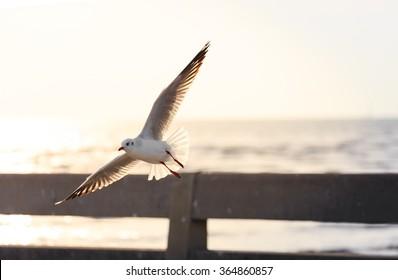 Seagull flying over the bridge close to beach before sunset