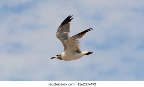A Seagull Flying Over a Cloudy Sky