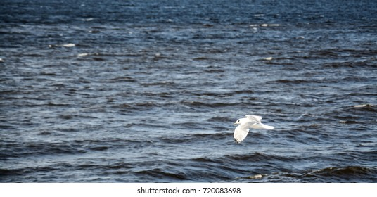 the seagull is flying over the river close up