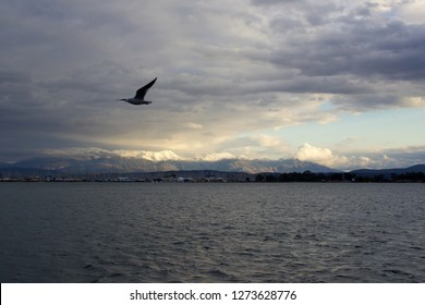 Seagull is flying over the sea at Ambracian gulf in city of Preveza after a heavy storm has gone in a cloudy day background view of mountains with snow and sailing boats moored at a marina in Aktion