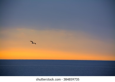 seagull flying over the sea at sunset in Alghero