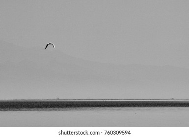 A seagull flying over the water