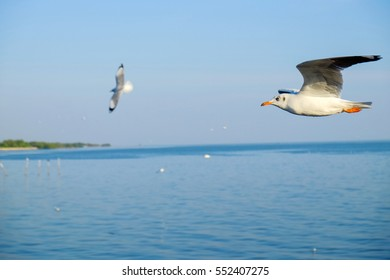Seagull flying in the sky, with significant mean freedom.