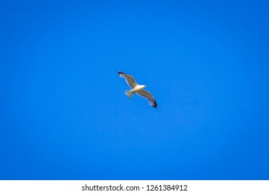 seagull flying in the sky at sudbury, ontario, canada