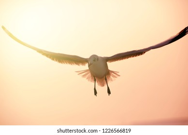 Seagull flying in the sky and sunlight in background. Freedom of Life.