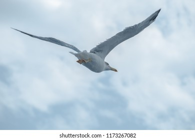 Seagull Flying in the Sky, Villasimius