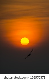Seagull flying to Sun in the Sunset