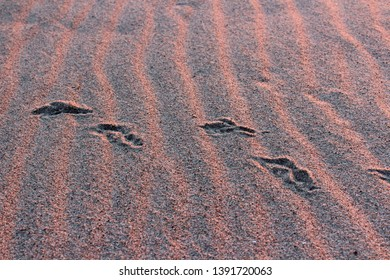 Seagull footprint in sand and evening light