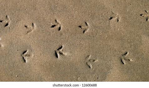 Seagull footprints across the sand