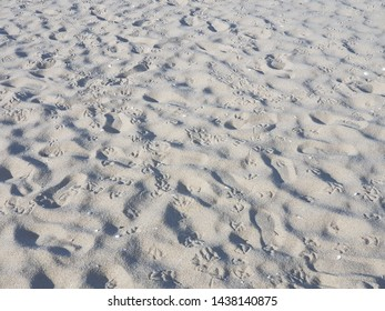 the seagull footprints left on the sand