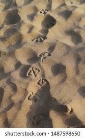 Seagull Footprints on the Beach