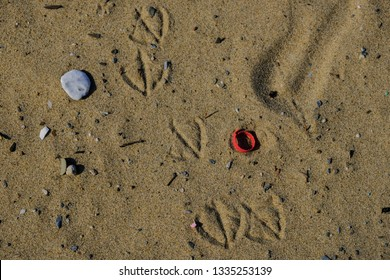 Seagull footprints on plastic polluted sandy beach ecosystem composition