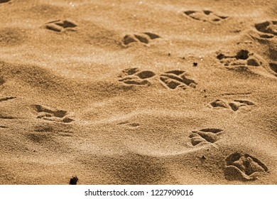 seagull footprints on sand