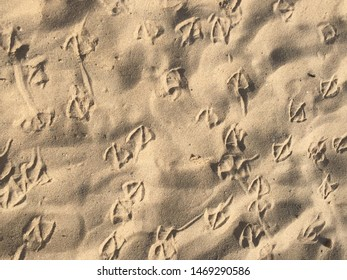 seagull footprints on the sand , bird feet pattern,  Ocean Beach rippling sand background texture
