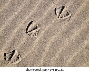 Seagull Footprints on Sand, Ocean Beach, rippling sand, background, texture