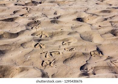 Seagull footprints on a sandy beach