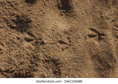 seagull footprints in the sand