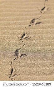 Seagull footprints in the sand, a close up view to the foot imprints in the sandy beach with a high contrast light