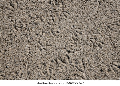 Seagull footprints in the sand on a Cornish beach