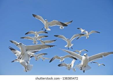 Seagull Frenzy