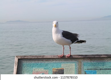 Seagull in front of the pacific ocean on Ventura pier