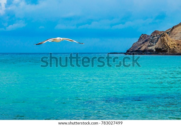 seagull-getting-ready-land-on-600w-78302