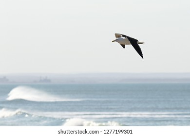 Seagull gliding high above the waves on a hot sunny day