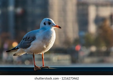 seagull in hamburg, alster