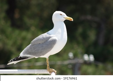 seagull has landed
