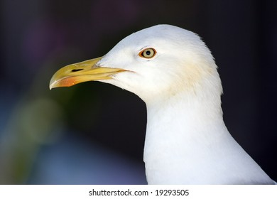 Seagull -head detail