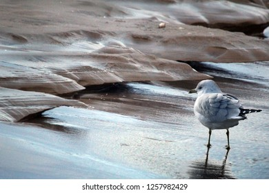 Seagull in icy sandy shoreline with reflections