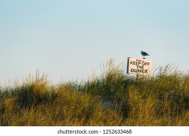 "Seagull and ""Keep off the Dunes"" sign at Fire Island National Seashore, New York"