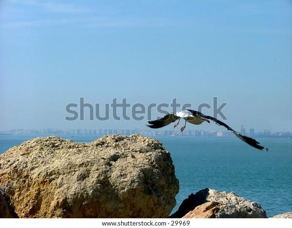 seagull leaving