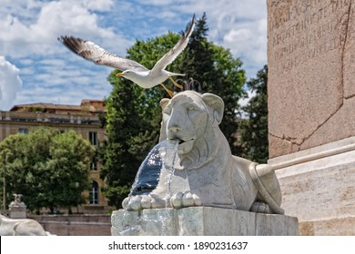 Seagull at the lion statue at Piazza del Popolo. Marble lions and fountains surround an old obelisk in the center of Piazza Popolo, Rome, Italy