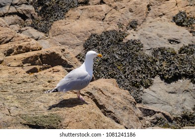 seagull looking at the horizon