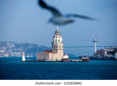 Seagull and Maiden's Tower/Istanbul,Turkey,January 2019