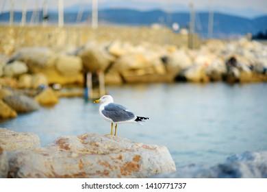 Seagull in marina of Lerici town, located in the province of La Spezia in Liguria, part of the Italian Riviera, Italy.