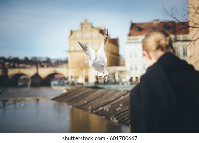 Seagull, in mid-flight with upraised wings, looking towards person that is flying around. Unique shot with shallow depth of field. Focus on bird, background (out of focus) is  the river and building.