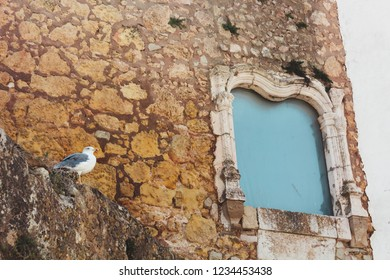 Seagull near antique historic monument window, Lagos, Portugal Ancient stone wall with clay. Walled / Tower Fortifications of Lagos, Muralha de Lagos.
