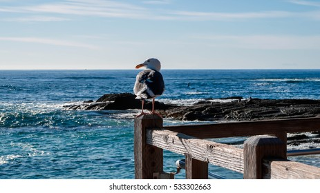 Seagull near the ocean
