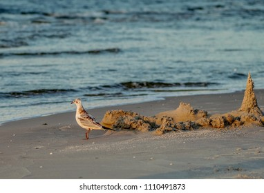 seagull next to a sand castle