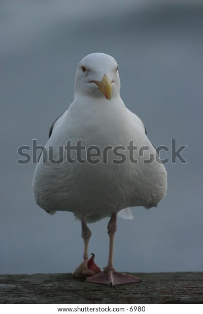seagull observing the day