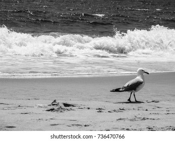 seagull on beach Black and white