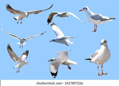 Seagull on a blue background, many styles