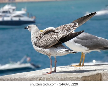 Attacking Seagull Images, Stock Photos & Vectors | Shutterstock