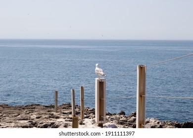 Seagull on the Coast of the Atlantic ocean