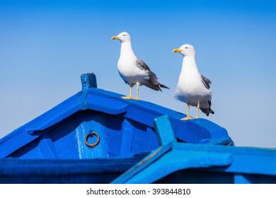 Seagull on the fishing boats in Essaouira, Morocco