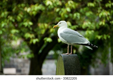 Seagull on a headstone