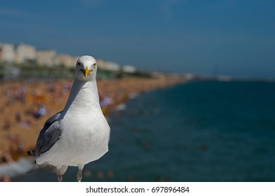Seagull on a pier