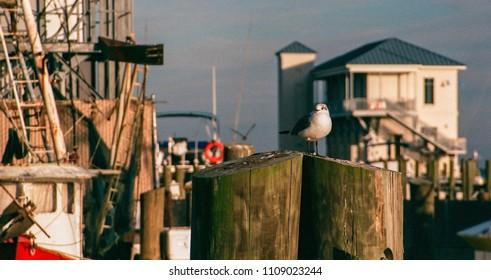 Seagull on Pier in Biloxi